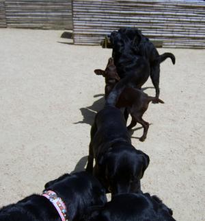 2008_05040_2dog01